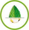 Salvia est une entreprise de la Roche sur Yon qui commercialise des compléments alimentaires bio. La formulation des produits à été faite par Luc Grossin, aromathérapeute et père de l'actuel dirigeant. Certaine de ces formules reposent sur des mélanges d'huiles essentielles à boire.