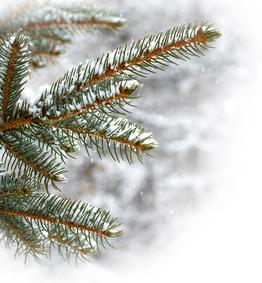 Salvia expert en aromathérapie, phytothérapie et naturopathie vous propose des compléments alimentaires bio contre les rhumes d'hiver. Ces produits sont des synergies d'huiles essentielles avec du niaouli ou encore du ravintsara.