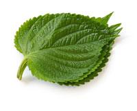Salvia, commercialise compléments alimentaires naturels pour renforcer ses défenses printanières et affronter l'éventuel rhume des fois ou autres gènes occasionnées par le pollen, graminée, acarien