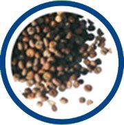 Les huiles végétales produites par Salvia, sont obtenues par pression à froid des graines contenue dans les plantes. Les huiles végétales servant de base à nos formules sont sélectionnées pour apporter un atout supplémentaire. L'huile végétale utilisée est souvent l'huile de périlla pour ses apports en oméga 3.