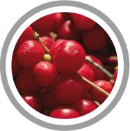 Salvia spécialiste des compléments alimentaires, utilise le schizendra dans certaines de ses formules. Notamment celle de la gamme sport car il répond aux besoins nutritionnels des sportifs