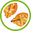 Salvia expert en aromathérapie, phytothérapie et naturopathie vous propose un complément alimentaire bio pour renforcer les défenses immunitaires. Ce produit est disponible sous forme de poudre ou de gélules. Il s'agit de cynorrhodon cryobroyé.